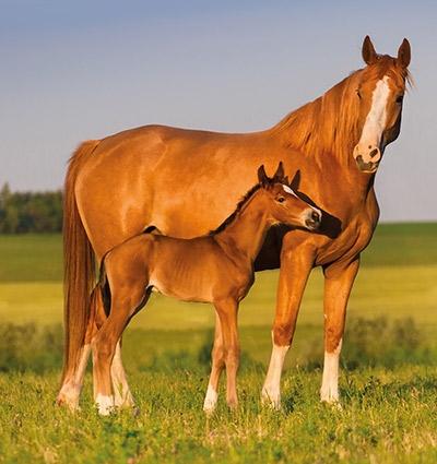 horse-foal-mare.jpg