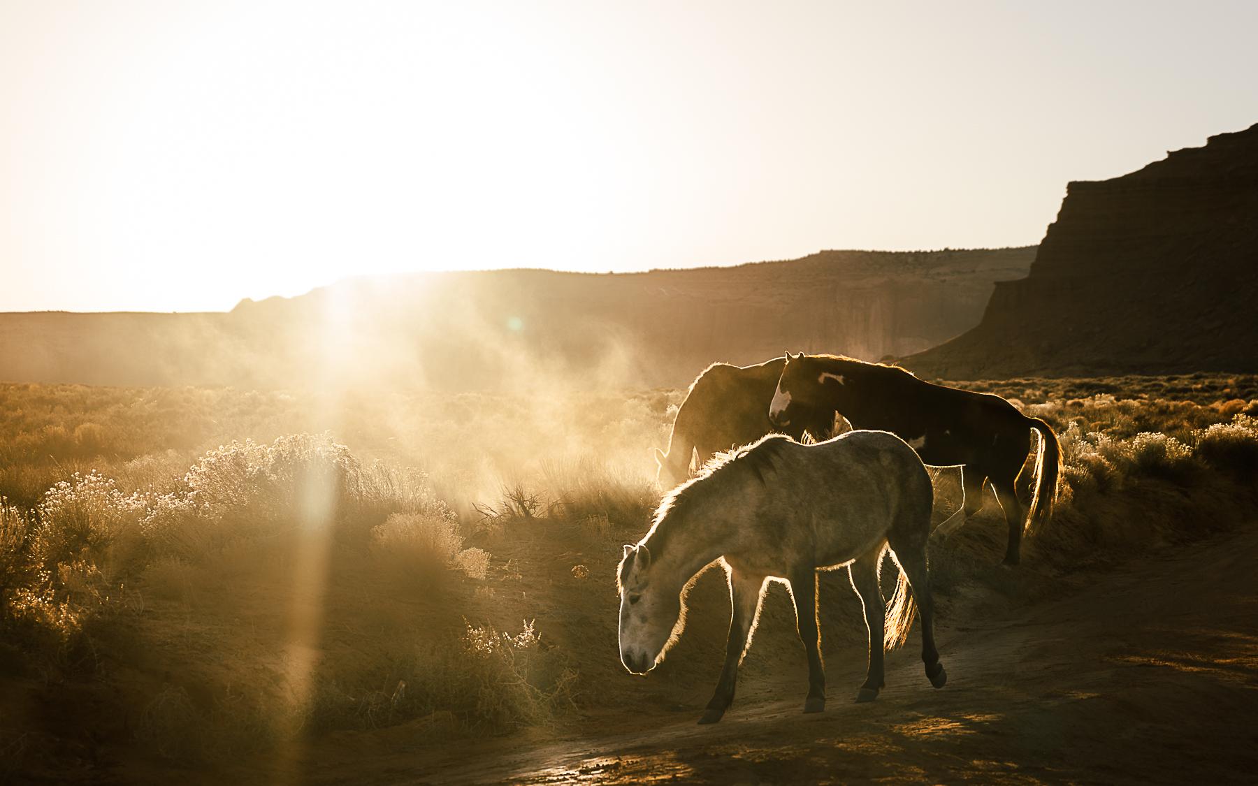 Wildhorse5.jpg