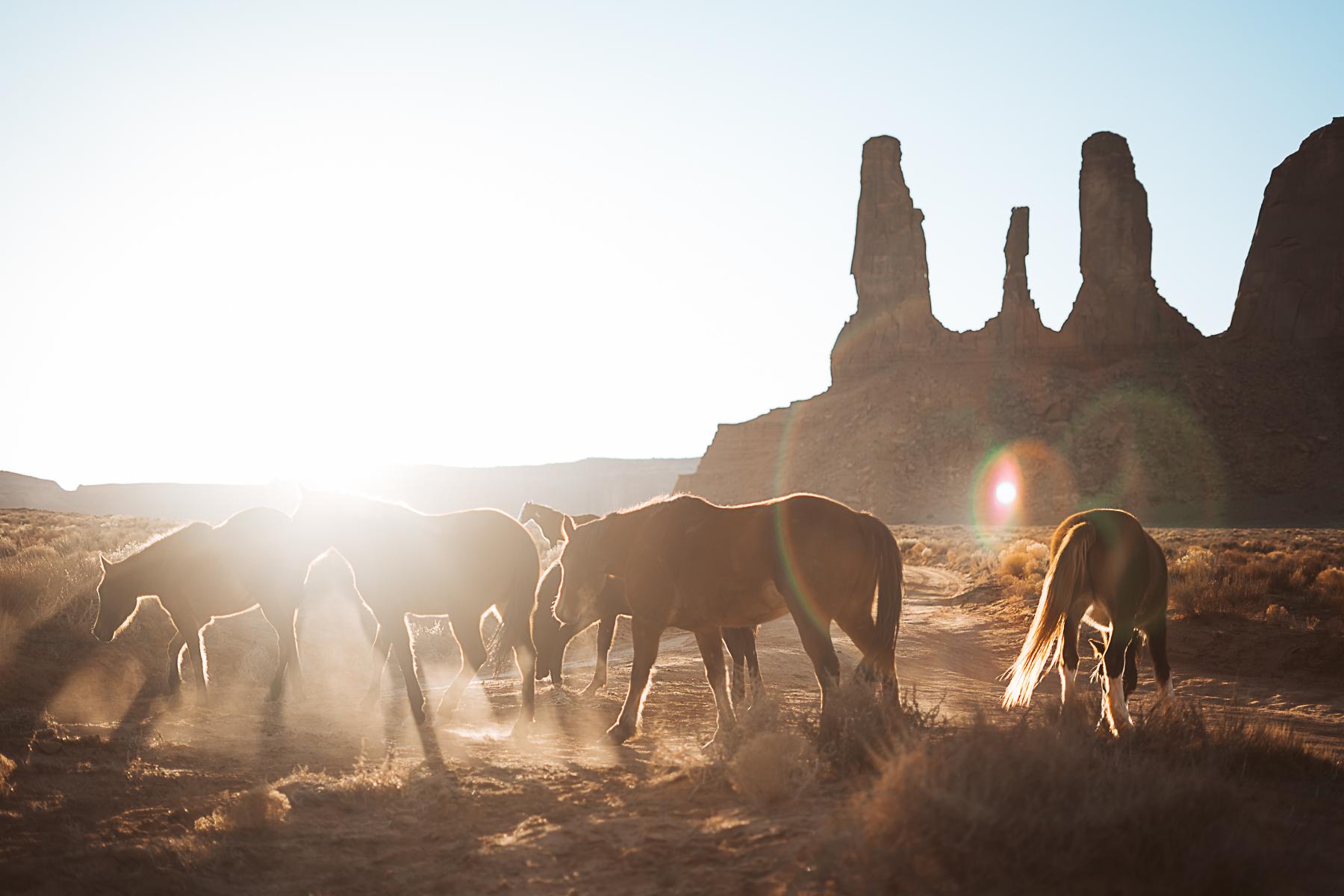 Wildhorse13.jpg
