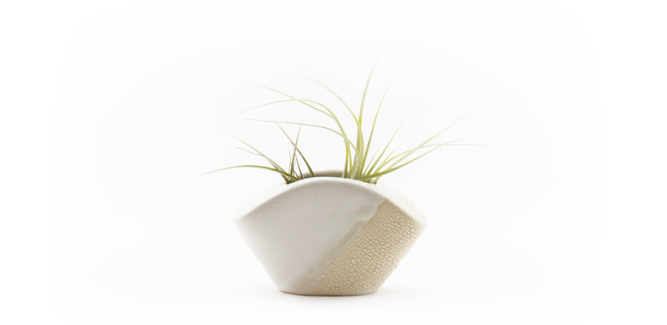 Vase White Slideshow.jpg