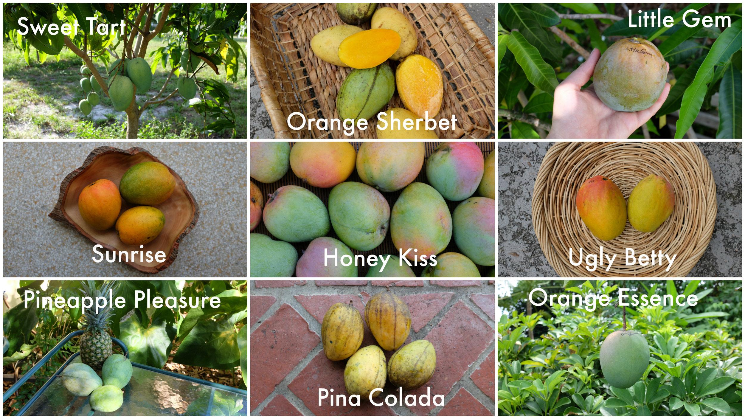 Gary Zill New Varieties 1.jpg