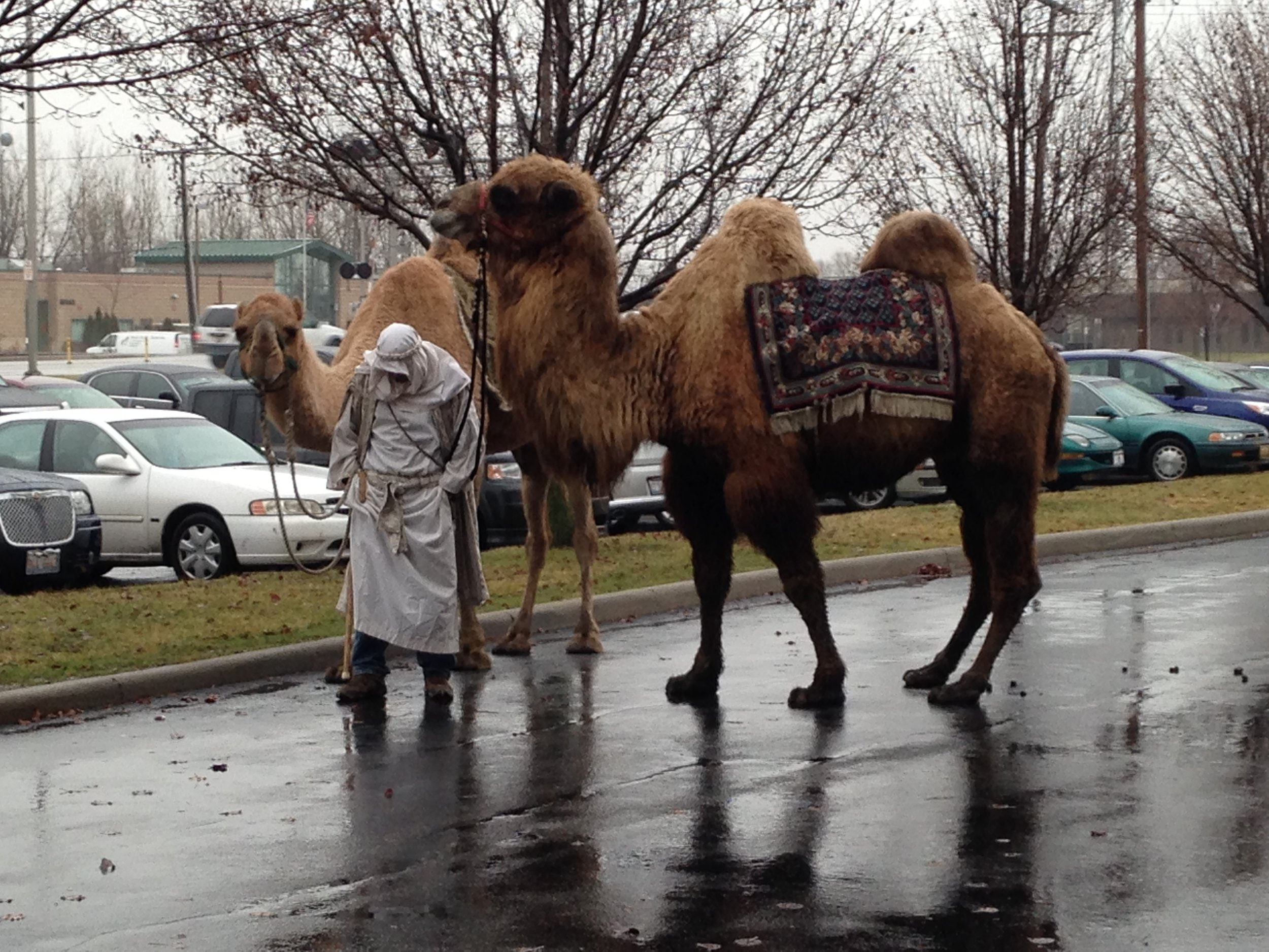 My buddy Omar The Camel. He died in 2017 (Photo By Chandra L. Gary)