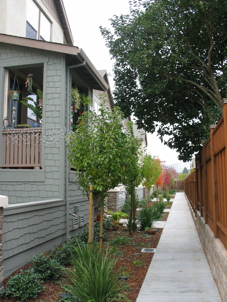 Redwood Village Subdivision in San Rafael, CA