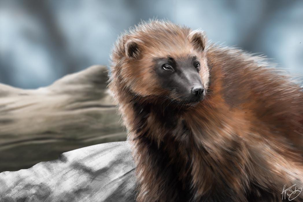 Wolverine painting