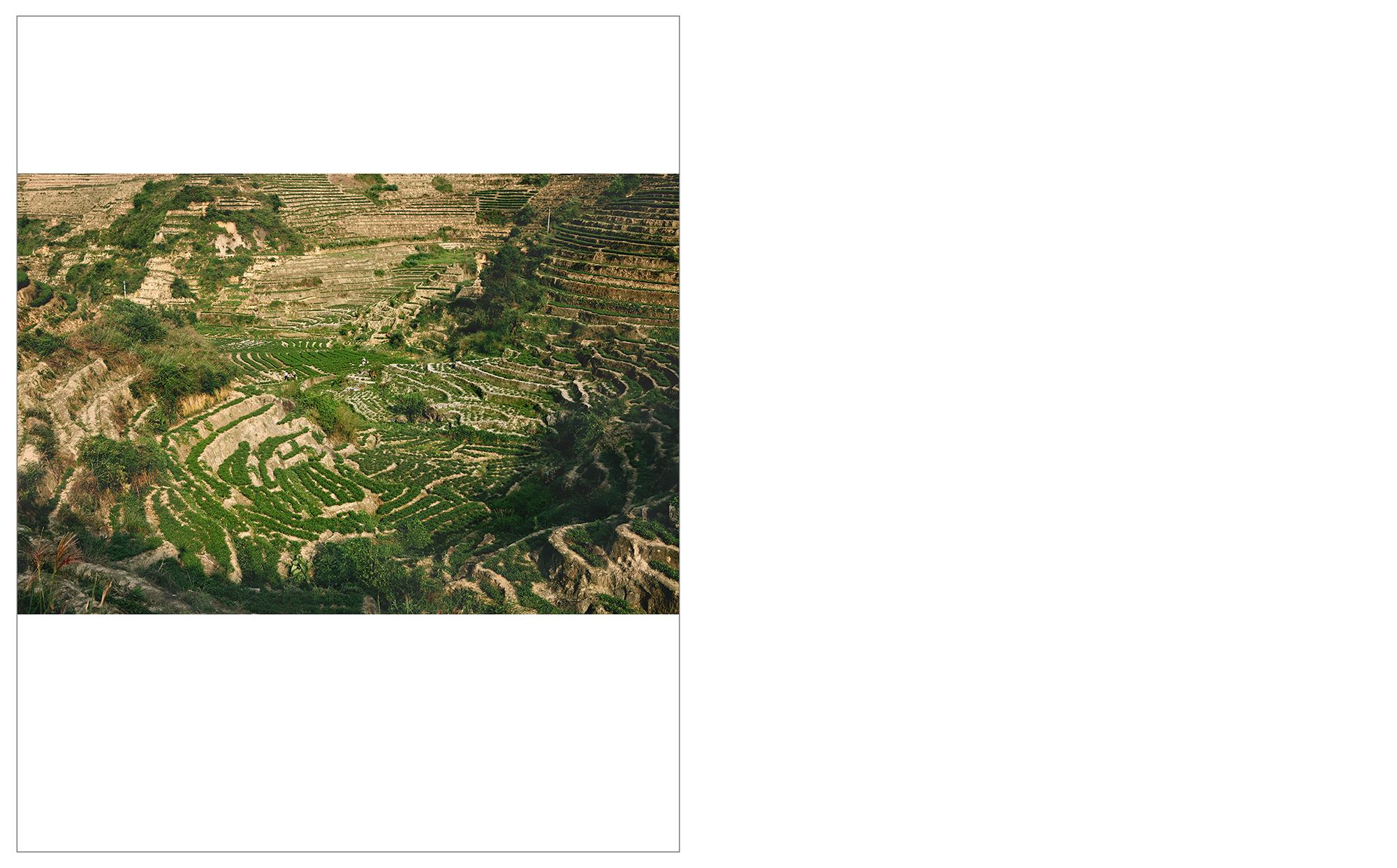 Tea Field - Gande, Fujian Province    info