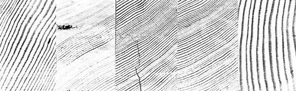 woodgrain-journal-3.jpg