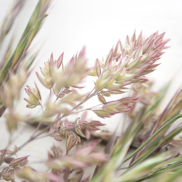 journal-wheat-detail-2.jpg