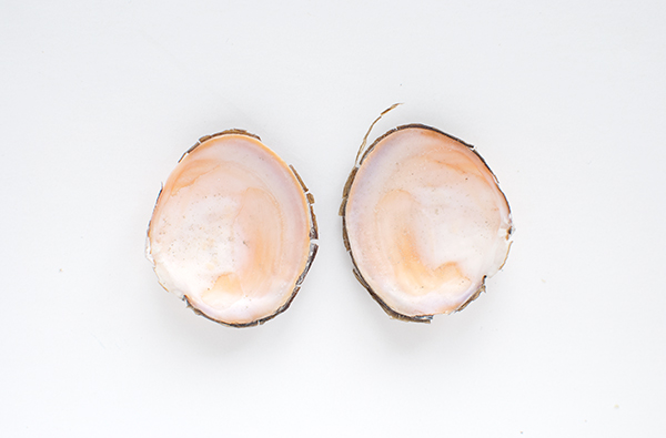 journal-shells1.jpg