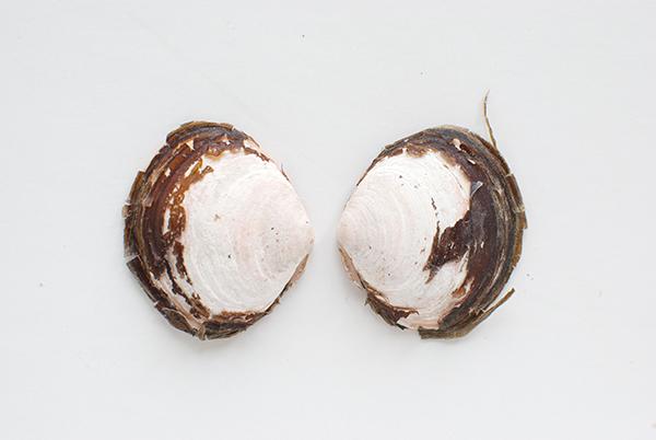 journal-shells2.jpg