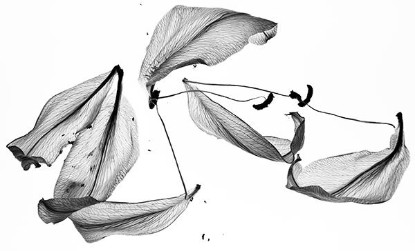 journal-lilies-1.jpg