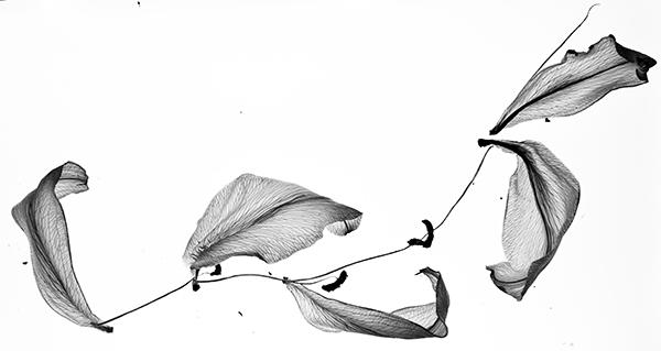 journal-lilies-2.jpg