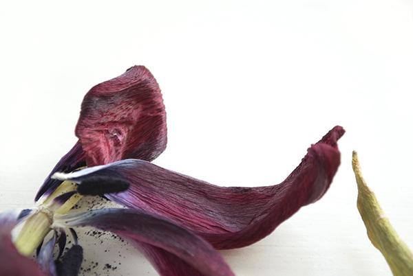 jour-florals-5-oct16.jpg