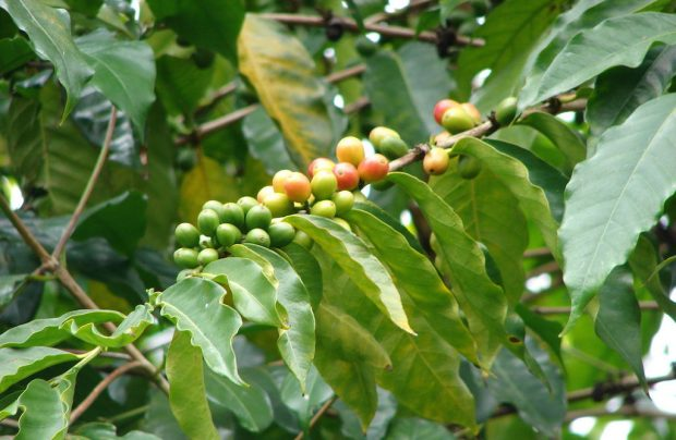 THE 2016 COFFEE ORIGIN YEAR IN REVIEW -
