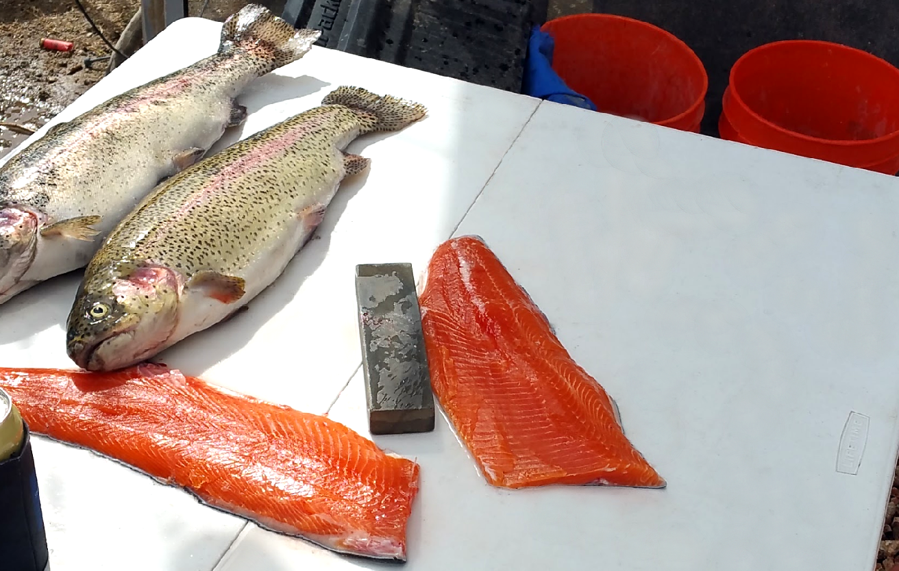 rachel-vonfleck-from-fish-to-fillet-trout