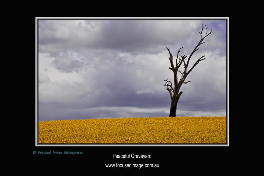Peaceful Graveyard.jpg