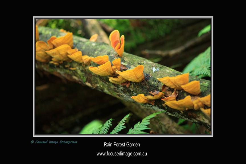 Rain Forest Garden.jpg