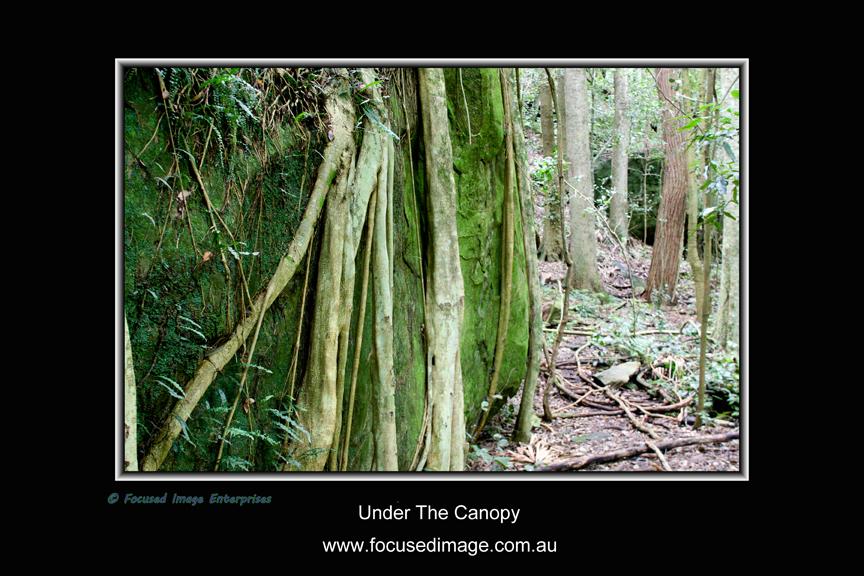 Under The Canopy.jpg