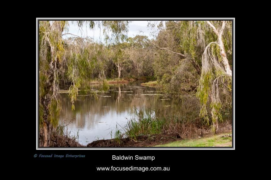 Baldwin Swamp.jpg