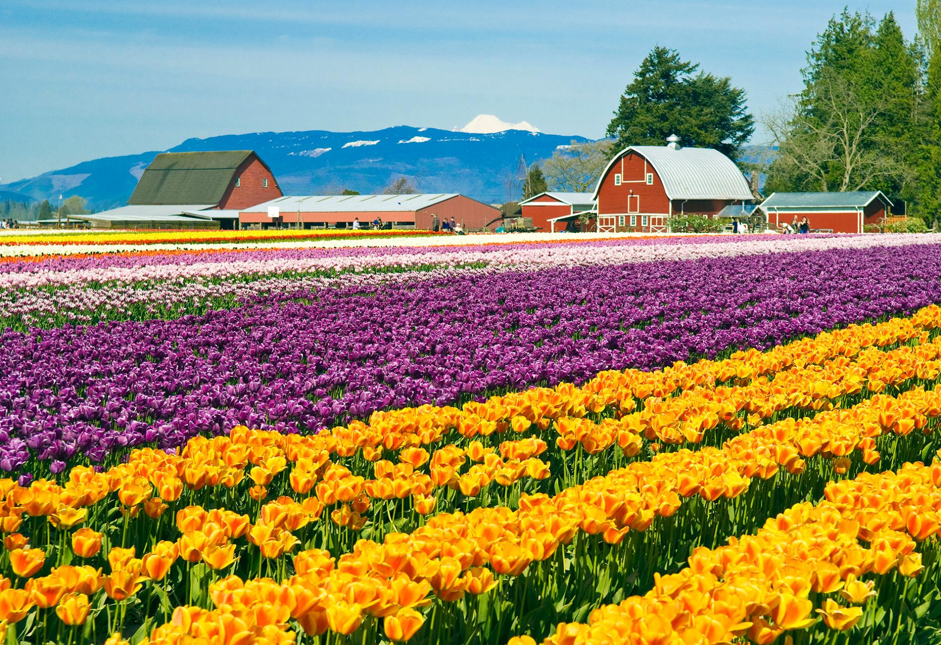 Skagit Valley in Washington State (Google Images)