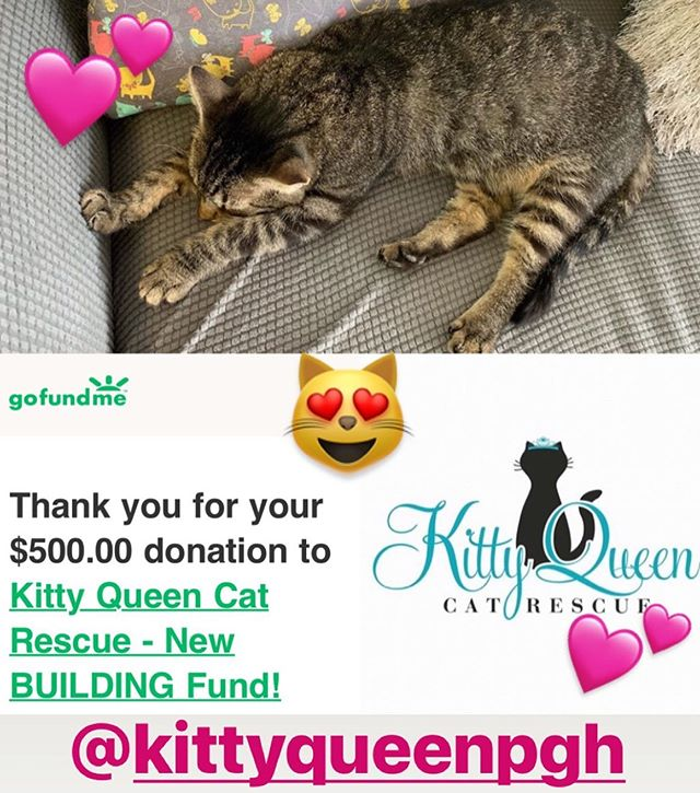 We had been planning on doing a week long cattattoo fundraiser for @kittyqueenpgh but had to postpone this due to the many losses in my family recently. I am keeping regular work hours, but taking a few days to get caught up on work from traveling and being out of town. I hope that these extra days will help me to try and put together everything that has happened in the last few years. It has been go go go without breaks and we have had some high highs and deep lows. Thank you for understanding, we have donated money to continue our support of this lovely kitty rescue in place of the fundraiser and encourage you to check them out as well! Thanks, as always, for supporting local artists and business folks. We are small operations run by few people regardless of our personal life circumstances. It is a challenging and rewarding occupation, but it is amazing to see something you built with your own hands become real. 👏🏽💕🇵🇷🌈💕 @pmatattoopgh, my home sweet 🏡