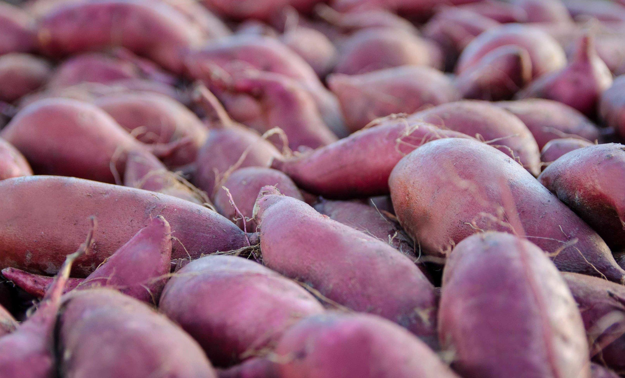 sweetpotatoesweb.jpg