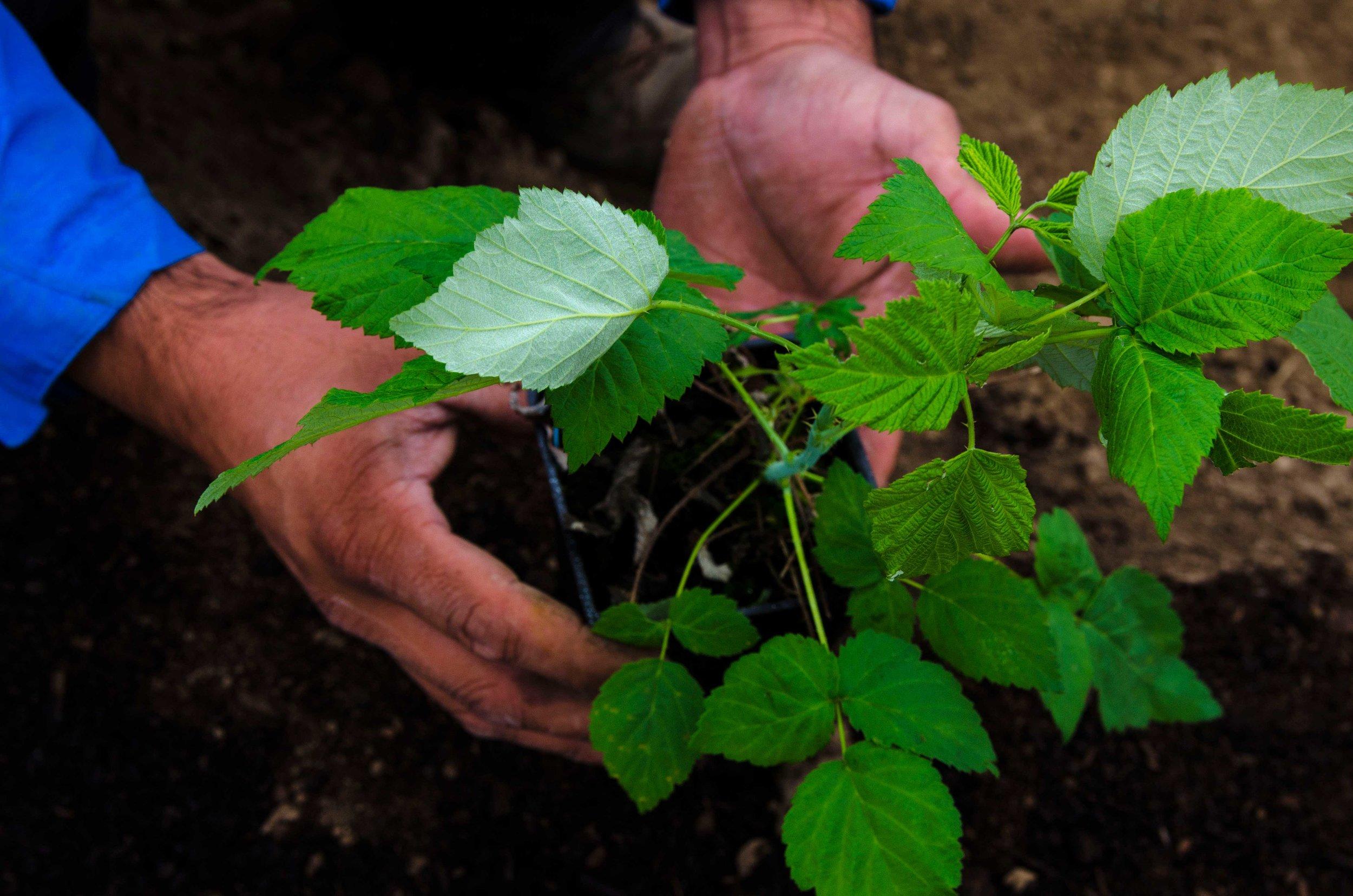 plantingforweb.jpg