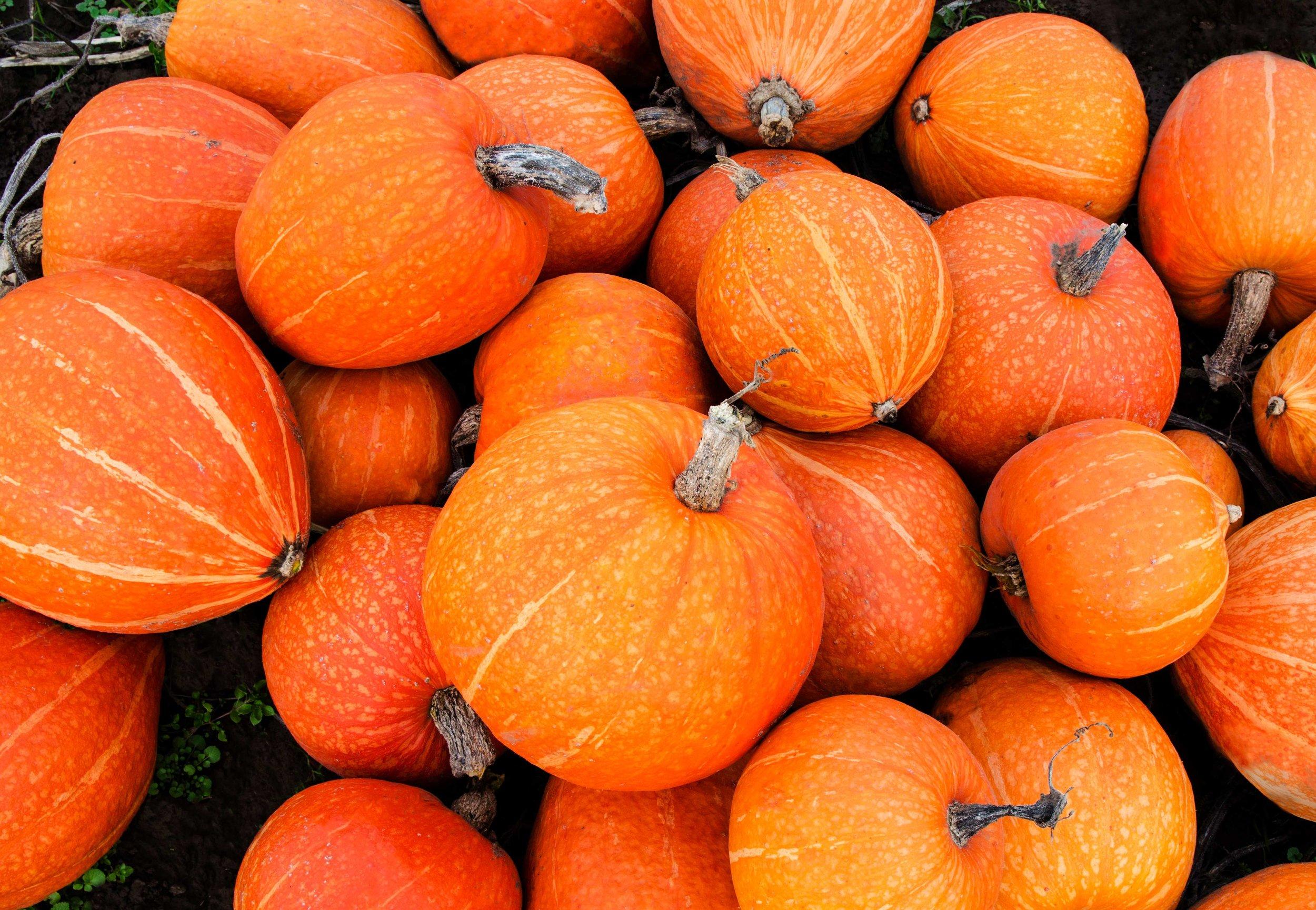 pumpkinforweb.jpg