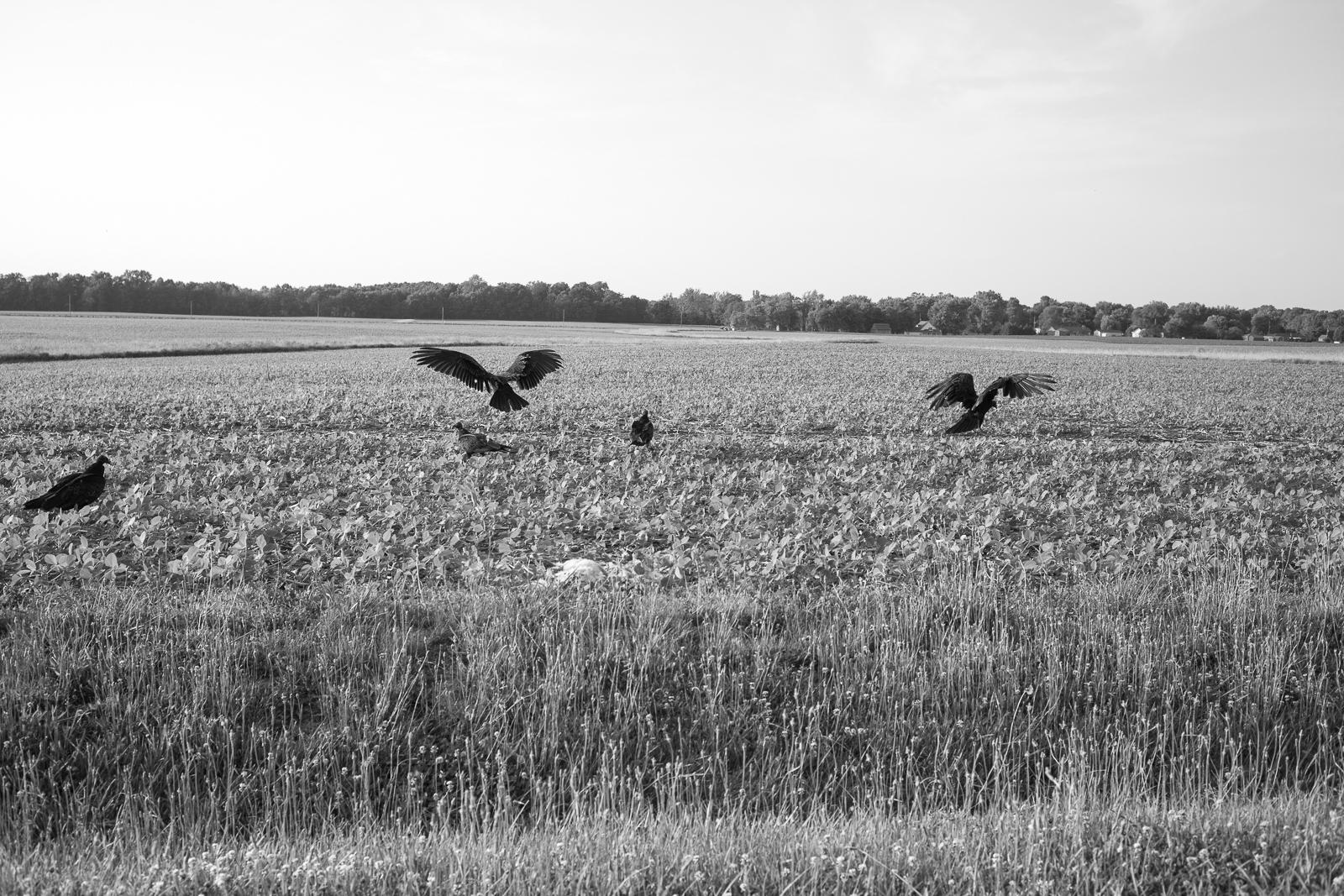 Matthew Carroll-57.jpg