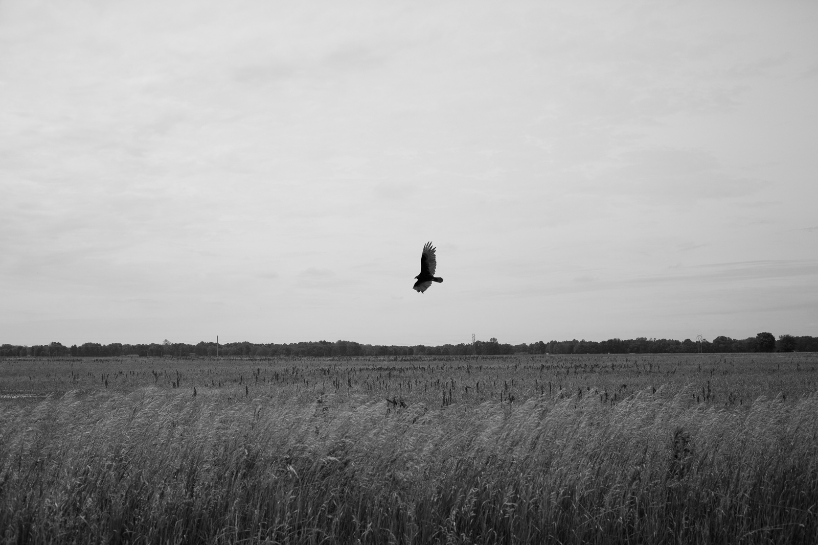 Matthew-Carroll-90.jpg