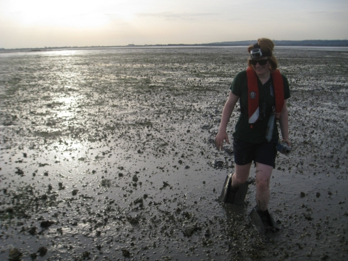 Surveying seagrass back home in the Solent (photo Amy Marsden)