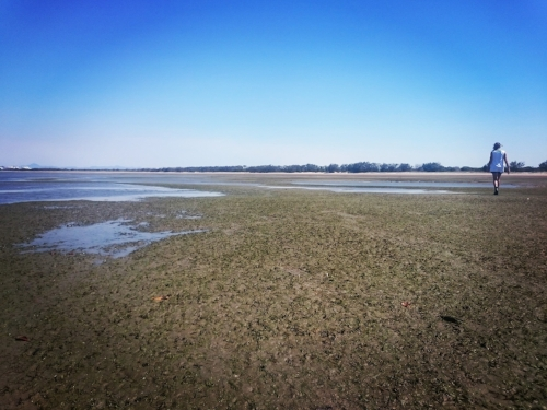 Surveying seagrass off Lilley's beach in Gladstone Harbour