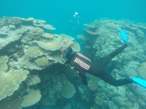 Snorkelling on the GBR