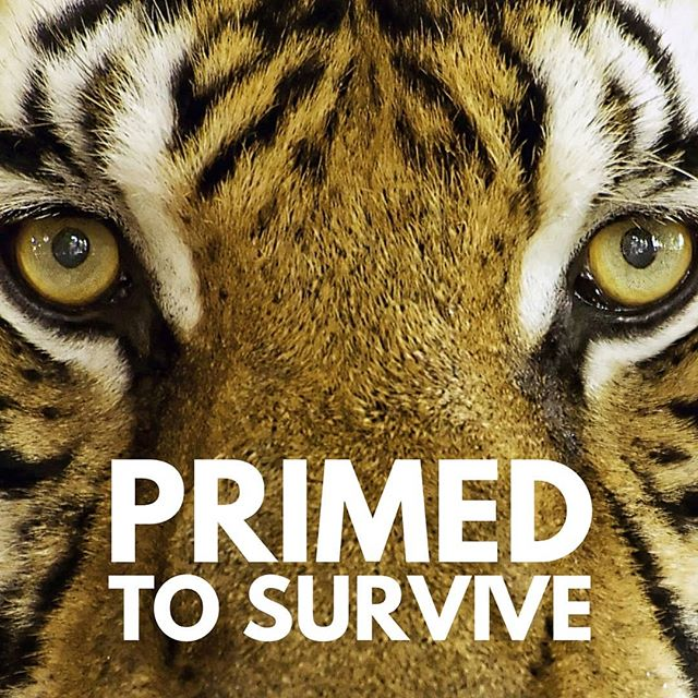 Whenever your nervous system detects danger (whether real or imagined) and the automatic survival responses kick in, no amount of insight or understanding alone will be able to turn the survival response off. 🐅  As long as your nervous system is in survival mode, that response is driving your perceptions, your psychology, your behaviour and your physiology.  When you find yourself in an automatic defensive response you are primed to survive AND not primed to be happy, relationally connected, or at ease. 🦎  And chances are that our survival responses are getting triggered not by actual life-threatening events like running from a tiger. Instead, our survival responses are likely being triggered by everyday situations such as running late for a meeting, being stuck in traffic, a looming deadline, having an argument, feeling ashamed or anxious or overwhelmed, or like me, public speaking. 🦌  I experienced this first hand recently before presenting a workshop on this very topic to a group of health and wellness practitioners (gulp). If you're curious to know how things went you can pick up the story on my ideas blog. Link in bio. 🐎  #movement4resilience #regulate4resilience #selfregulation #freeofwildcats #primedtosurvive