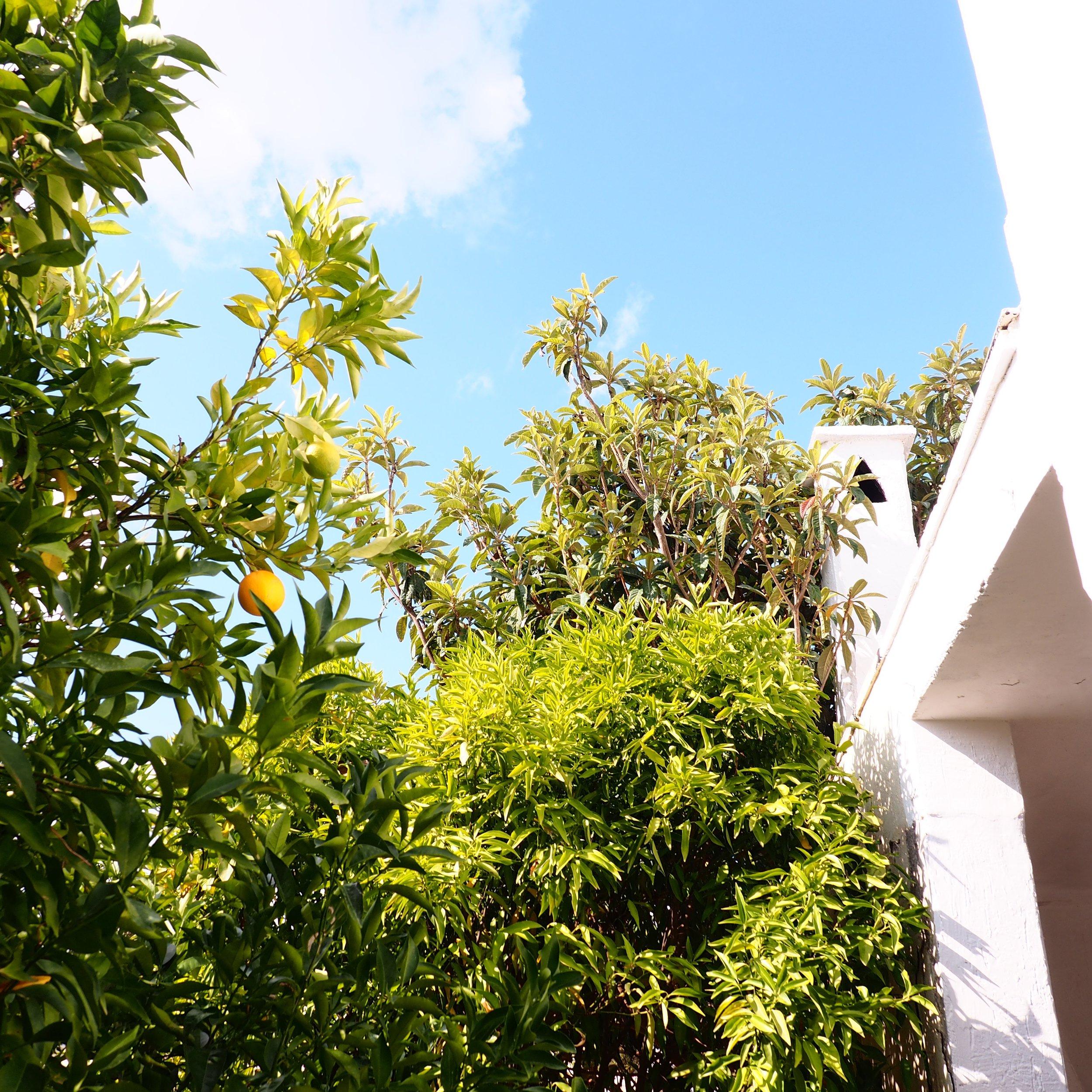 Ext Oranges.jpg