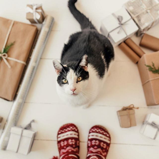 """Time to wrap! With cosy socks, steaming cups, candles and A Child's Christmas in Wales, written & read by Dylan Thomas: """"December, in my memory, is white as Lapland, though there were no reindeers. But there were CATS."""" https://youtu.be/Hv4-sgFw3Go  Merry Christmas to all! 🎅"""
