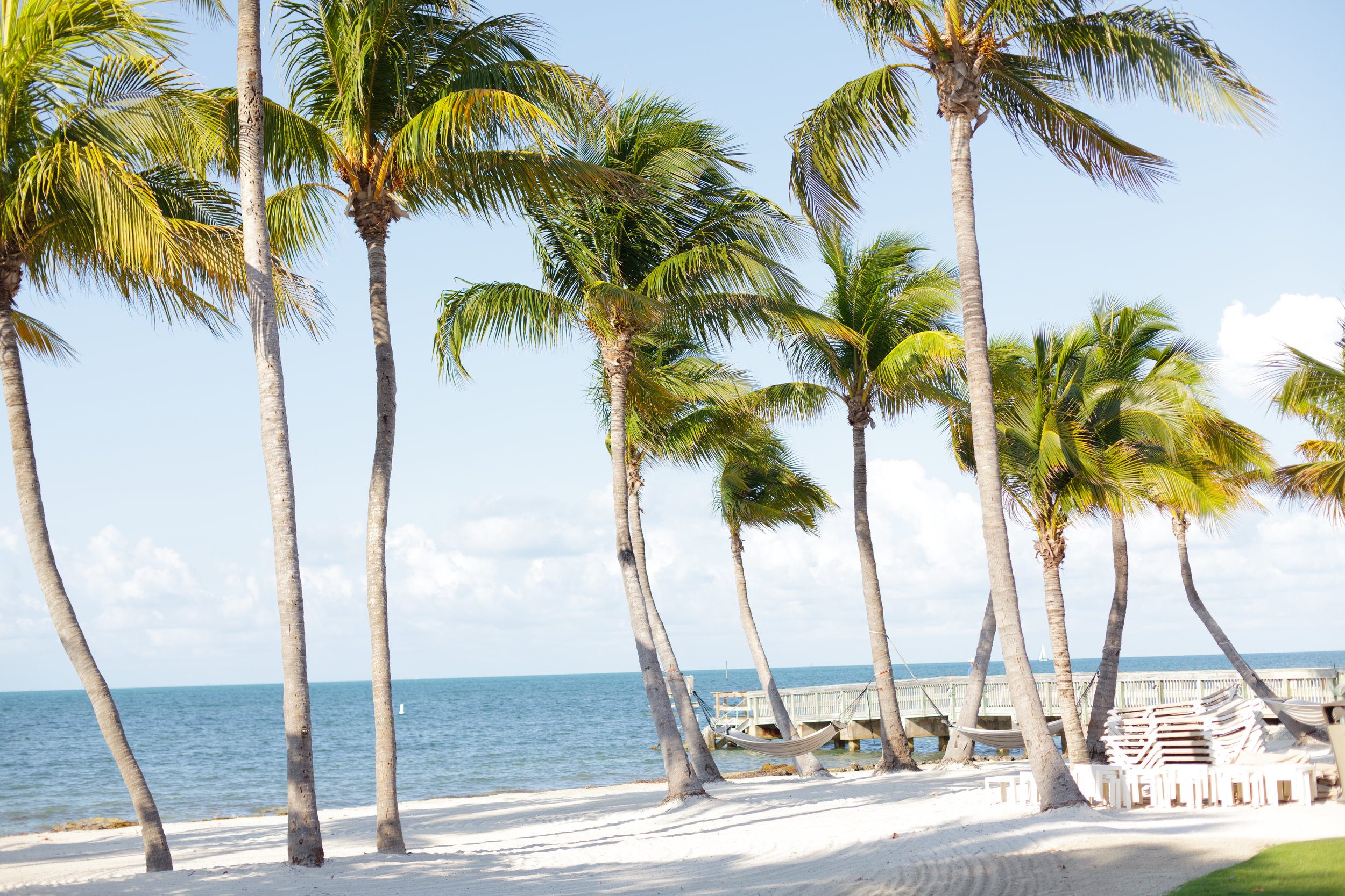 Tall palms swaying in the wind on a Key West beach.