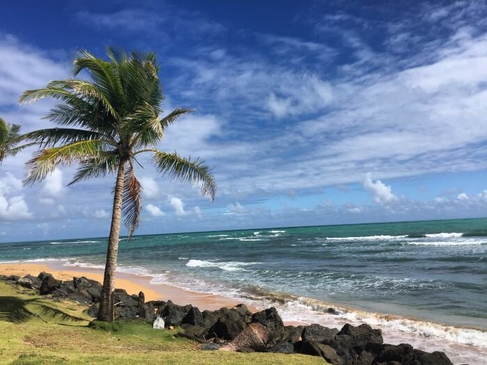 A beautiful windswept beach in Puerto Rico.