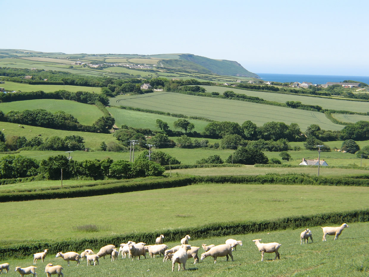 The view from the Woolbarn of sheep and the sea