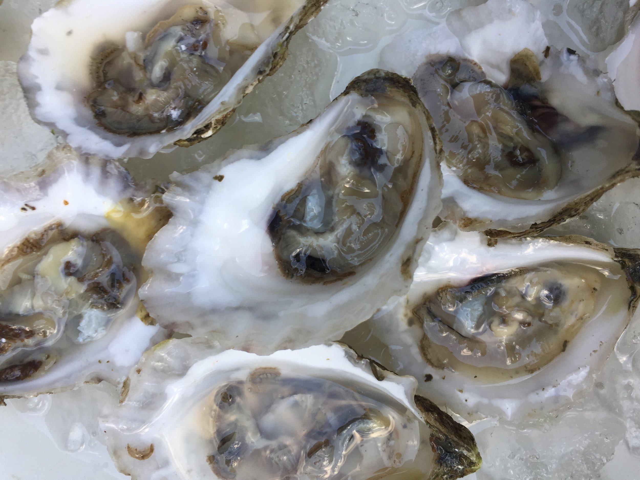 Bremen Pounds Medomak Oysters.jpg