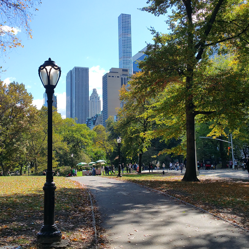 View from a run in Central Park