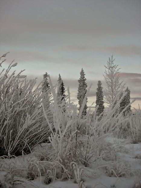 Frost Magic!