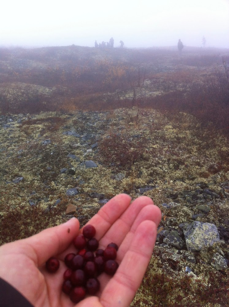 Cranberries are everywhere!