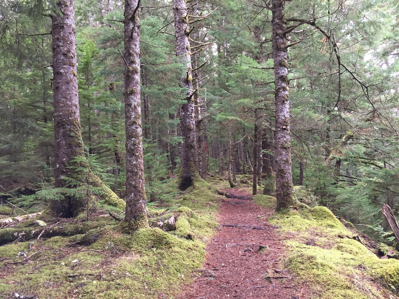 It is a magical walk among the trees and springy path