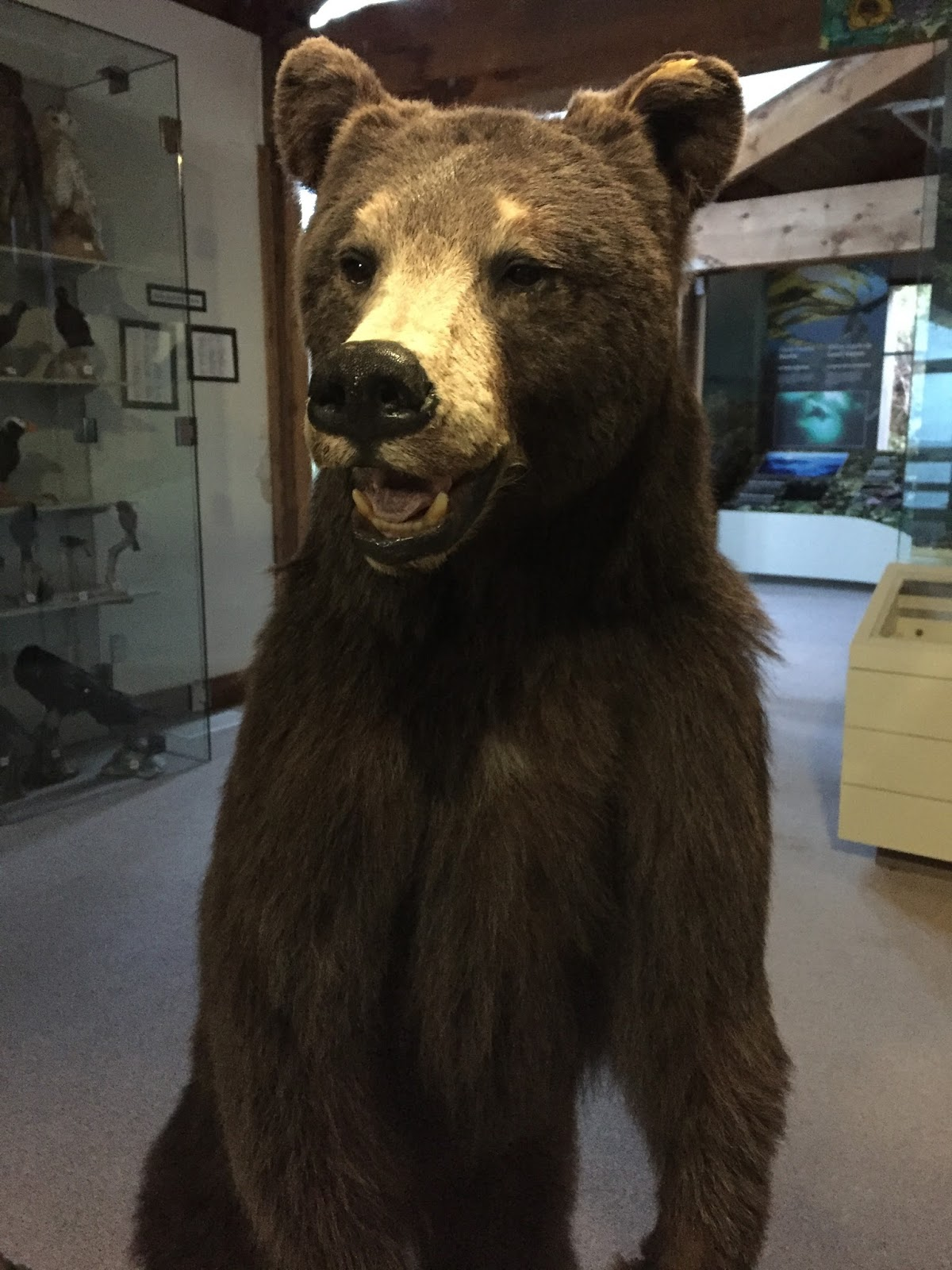 This bear has a cameo in the film