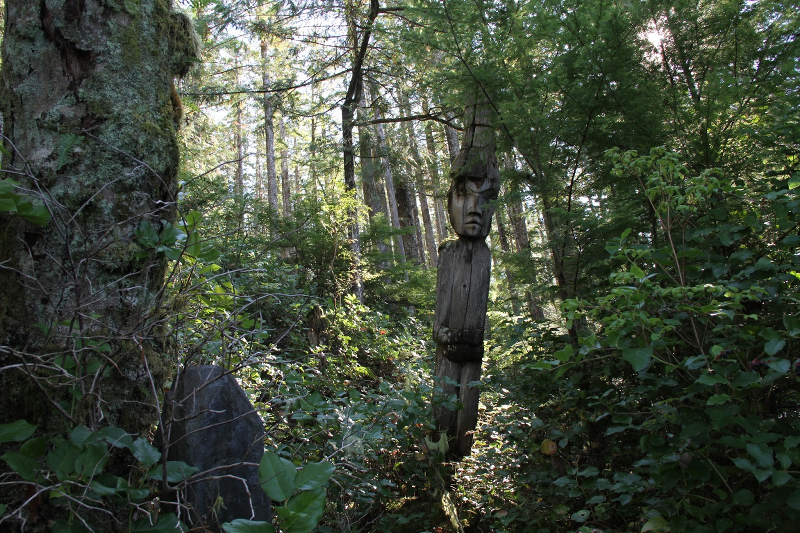 At first we didn't see it and then it revealed itself through the salal and trees...