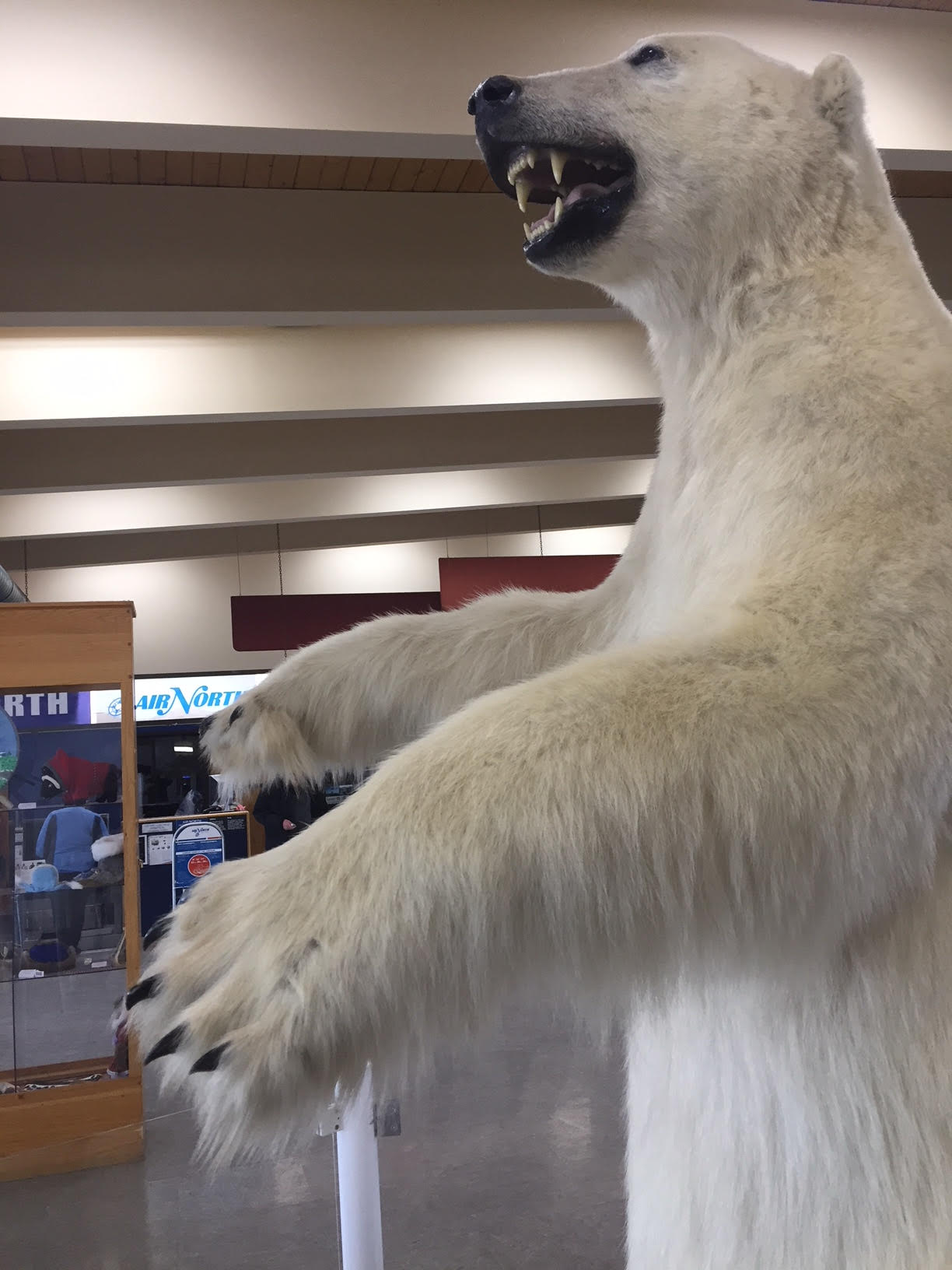 More time to learn about the taxidermy polar bear