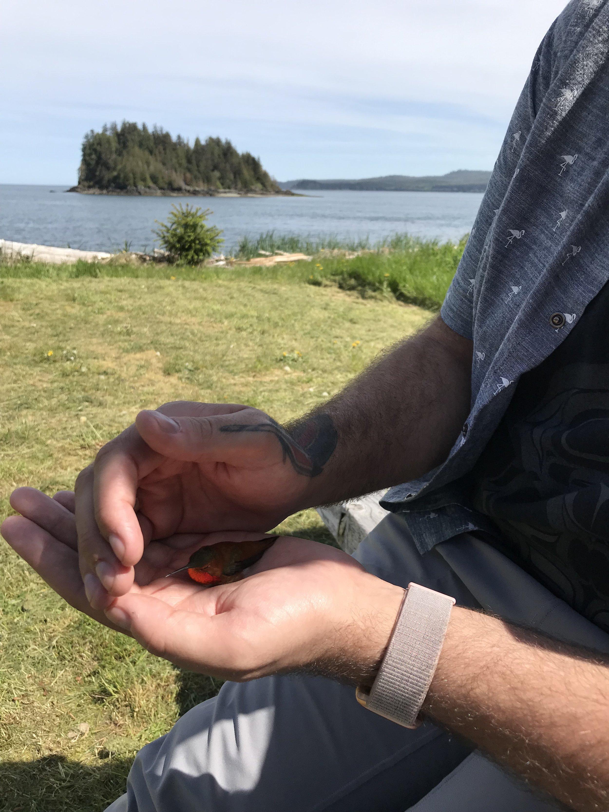 Patrick saved the humming bird!
