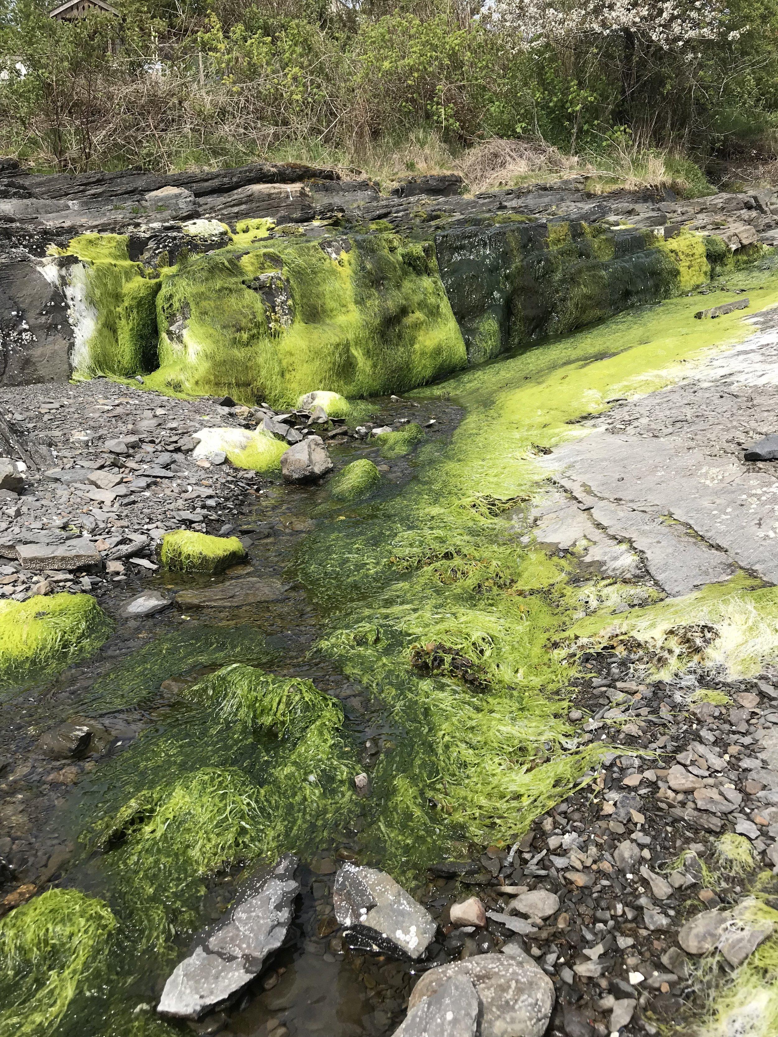 beautiful moss #no filter