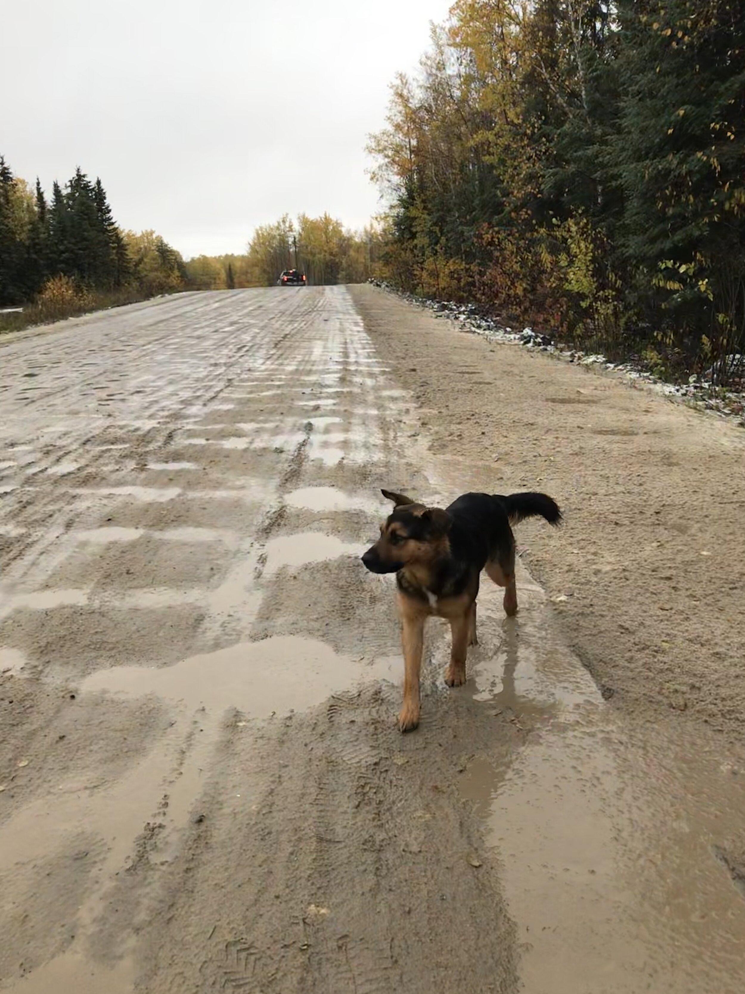 Dog on road!