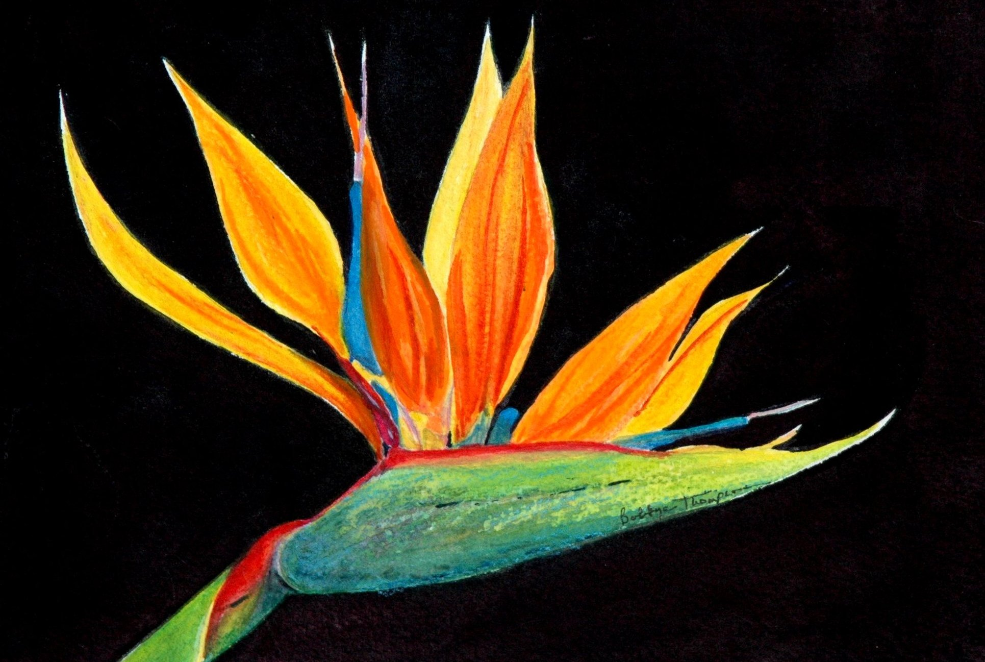 Bird of Paradise - Watercolor.JPG